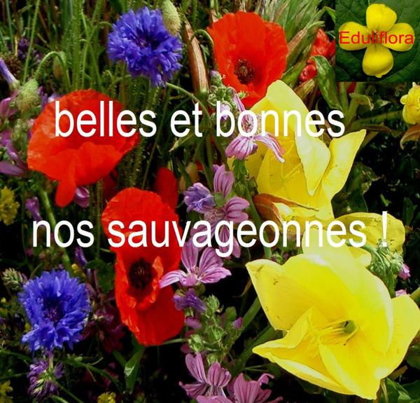 bellesetbonnesnossauvageonnes_screenshot_2020-03-19-bbs-pdf.jpg