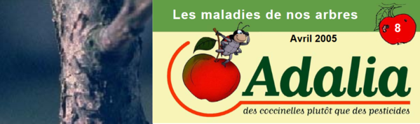 lesmaladiesdenosarbres_screenshot_2020-03-19-microsoft-word-dossier-maladies-doc-fiche-maladies-des-arbres-pdf.png