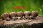 conferencelesescargotsdesjardinsetdesb_image_conferencelesescargotsdesjardinsetdesb_snail-2983235.jpg