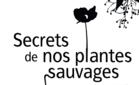 recueildesplantessauvagesutilesdenosjard_screenshot_2019-07-09-paysages_de_saveurs_p5-recueil_plantes_sauvages-pdf.png